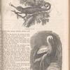 Chameleon ; Stork, page 153