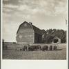 Barnyard scene on farm of rehabilitation client. Custer County, Nebraska.