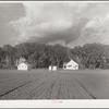 Douglas County farmsteads. Nebraska