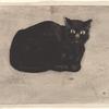 Chat noir sur un journal