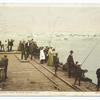 Fishing at Avalon, Santa Catalina, Calif.