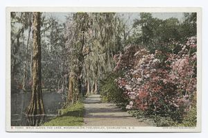Walk along the Lake, Magnolia on the Ashley, Charleston, S. C.