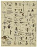 [Various insects and inse