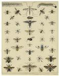 Flies & Bees.