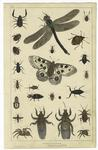 [Various insects and spid