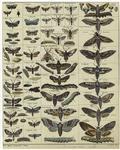 [Moths.]
