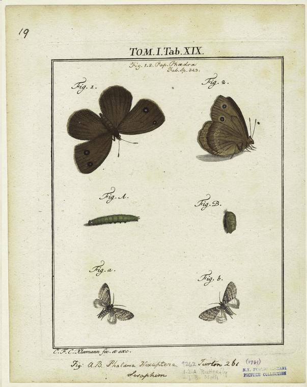 This is What Christian Friedrich Carl Kleemann and Butterflies And Moths Looked Like  in 1761