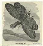The lantern fly.