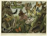 [Various insects.]