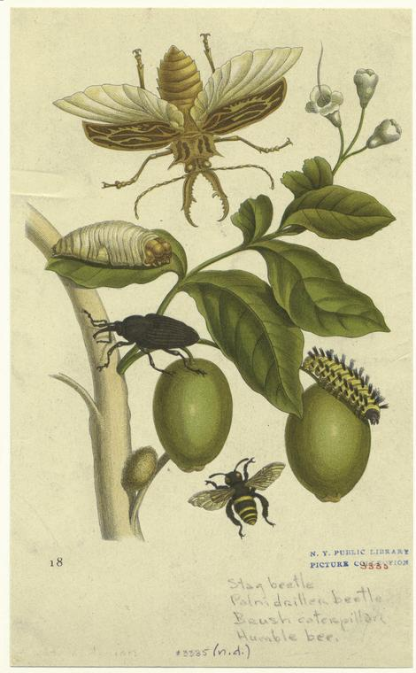 [Insects on olive tree.]