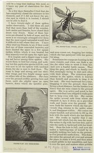 The digger-wasp, cocoon, and larva ; Digger-wasp and tiger-spider.
