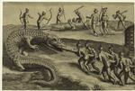 Florida Indians Kill Alligators, 1564.