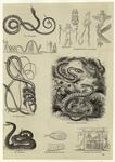 Scientific Drawings Of Snakes ; Snakes In Art.