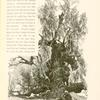 """Tamarisk- tree, Wâdy Feirân, Sinai.  """"And the sleep in the dried river channel, where bulrushes tell/ That the water was wont to go warbling so softly and well."""" -- Browining's """"Saul."""""""
