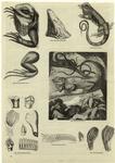 Head and limbs of iguana