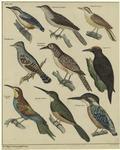 [Various birds.]