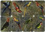 [Various birds on attache