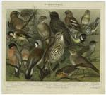 Stubenvögel I : Heimische Stubenvögel