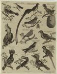 [Birds.]