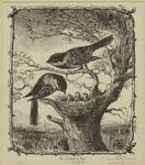 The chickadee's nest.