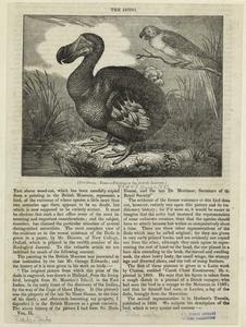 The dodo. Digital ID: 820507. New York Public Library