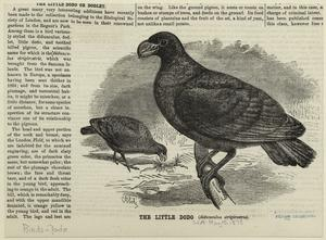 The little dodo (didunculus st... Digital ID: 820508. New York Public Library