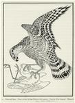 Falcon And Egret