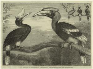 The hornbills, in the gardens of the Zoological Society, Regents Park.
