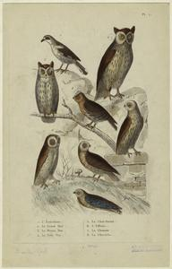 [Owls.]
