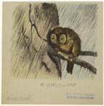 Owl On A Tree In Rain.