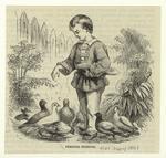 Feeding Pigeons.