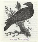 Raven.