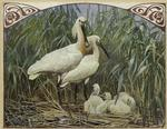 [Spoonbills and young.]
