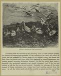 Storks Assembling For Migration.