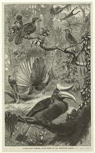 A Malayan forest, with some of its peculiar birds.