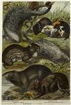 Brazilian Porcupine ; Sooty Paca ; Capybara ; Guinea Pig ; Tufted Tailed Porcupine.