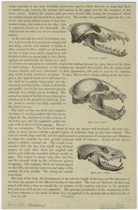 Skull of a bear ; Skull of a wolf ; Skull of a civet.