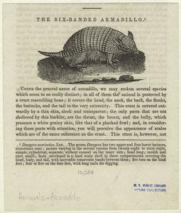 The six-banded armadillo.