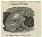 The great white, or polar bear