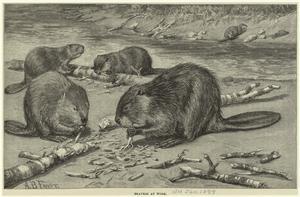 Beavers at work.