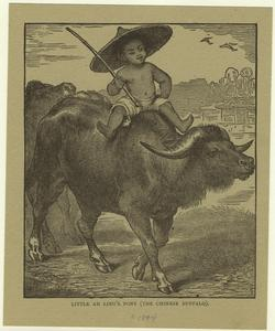 Little Ah Ling's pony (The Chinese buffalo).