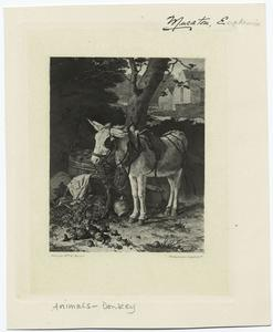 [Donkey fitted with bridle and saddle standing beside containers full of food.]