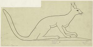 [Drawing of a cat-like animal, ancient Egypt.]