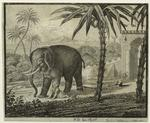 [Elephant and child outdo