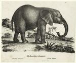 Afrikanischer Elephant.