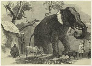 [Elephant and other animals in a village setting.]