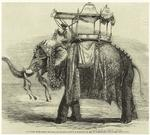 Elephant with state howdah, at Baroda