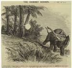 Elephanticide