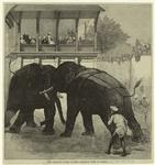 The Prince of Wales in India--Elephant fight at Baroda