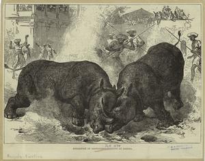 Exhibition of rhinoceros-fighting at Baroda.